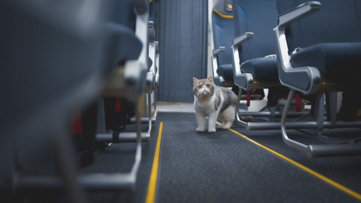 cats-on-a-plane