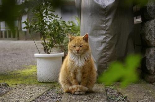 meditacate