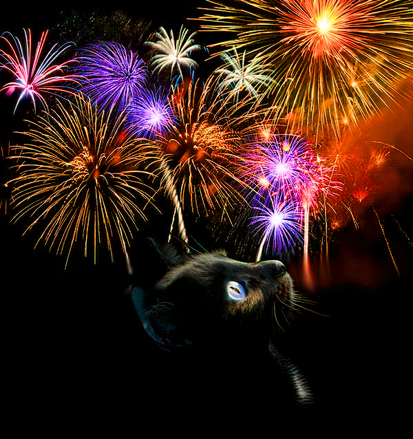 cat-fireworks