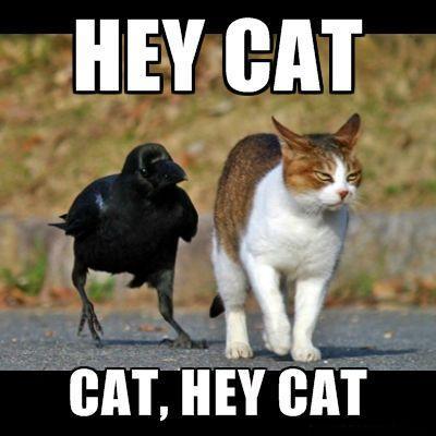 hey-cat-cat-hey-cat