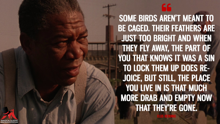Some-birds-arent-meant-to-be-caged.-Their-feathers-are-just-too-bright