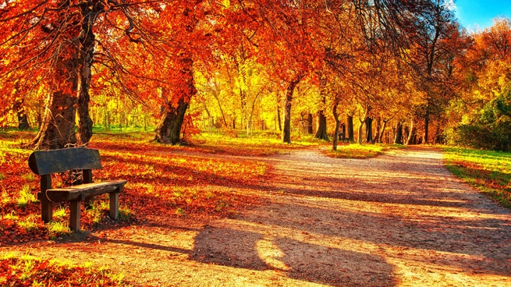 autumn-leaves-on-the-park_sm