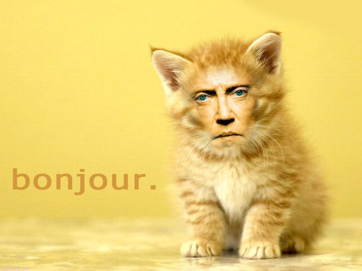 christopher_walken_cats_4_by_myownasylum