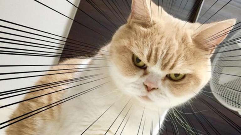Frowny-Cat-is-here-to-challenge-Grumpy-Cats-angry-feline-supremacy-768x432