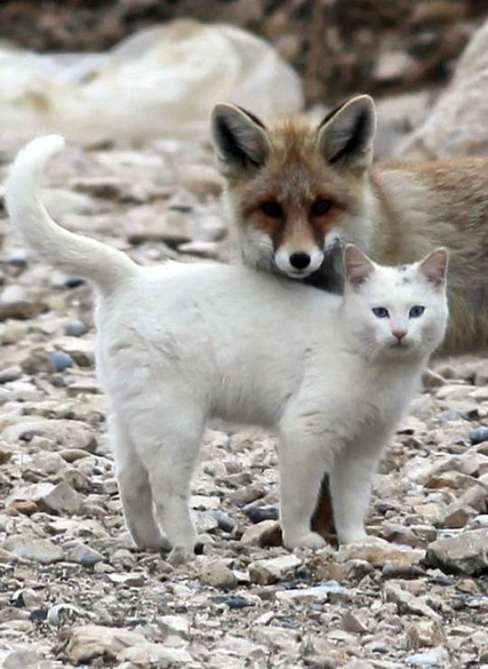 lake-van-cat