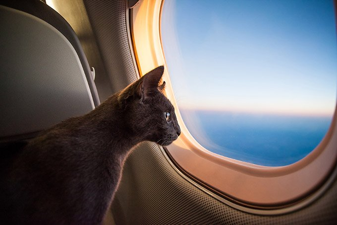 Traveling-With-Cat-2