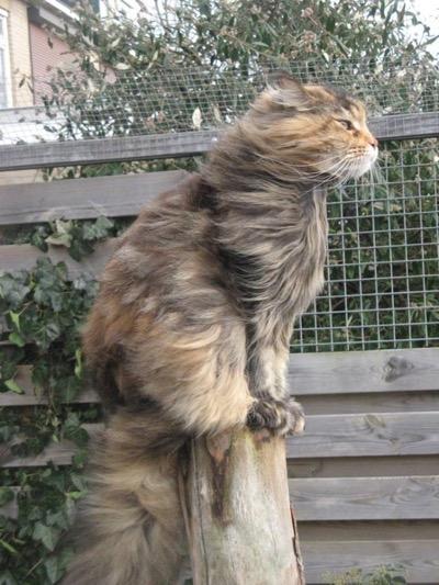 wind-in-my-hair