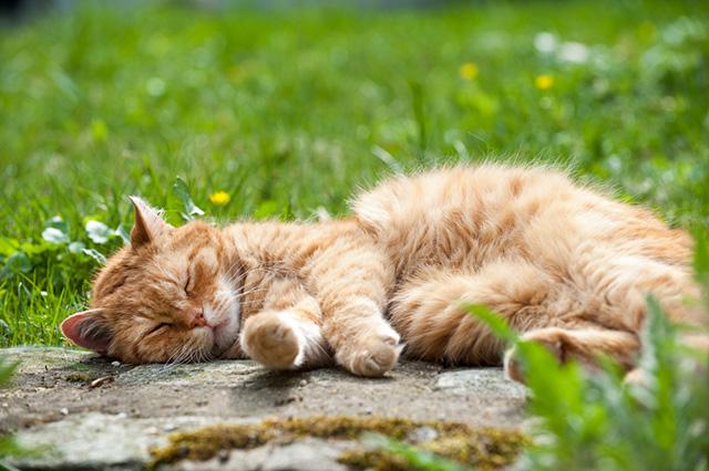 c_senior_cat_lying_in_sun