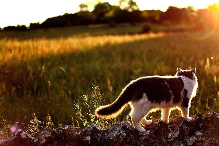 cat-in-the-field