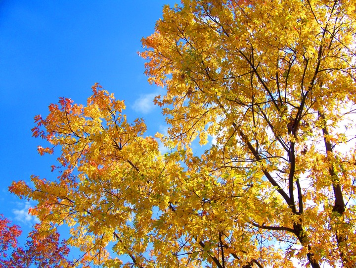 autumn-leaves-13052154424px