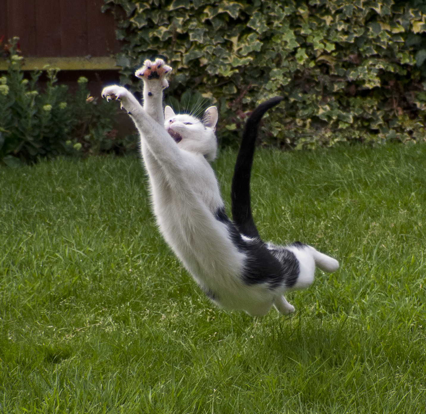 cat-leapage