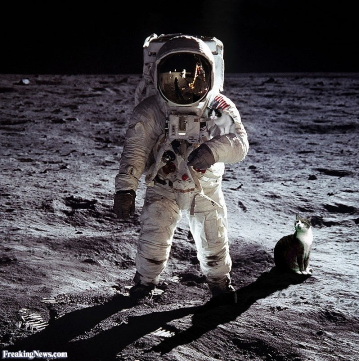 Cats-on-the-Moon--59828