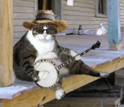 edd8f78501b47b36a2ce0c436540972c--friday-cat-music-guitar