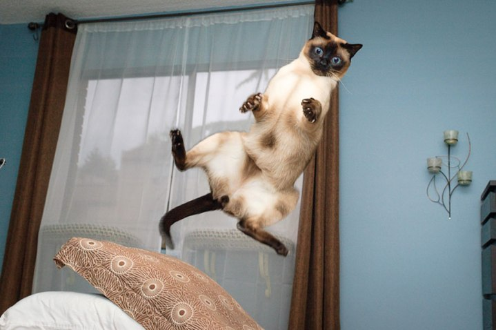 funny-cat-jumping-14-free-wallpaper