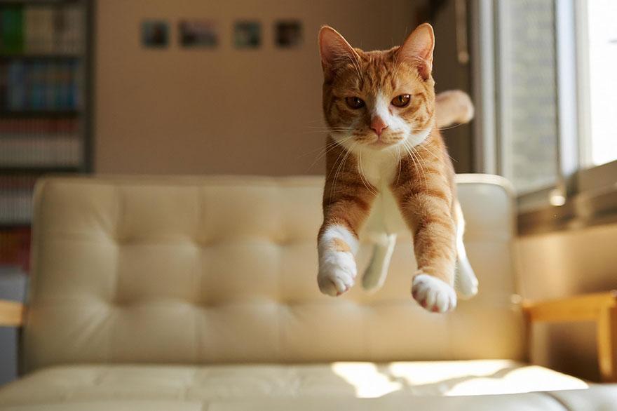 funny-jumping-cats-71__880.jpg