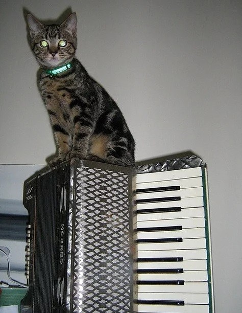 Top-10-Images-of-Cats-Playing-Musical-Instruments-4