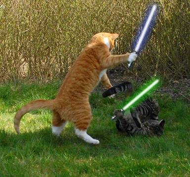cats-with-lightsabers