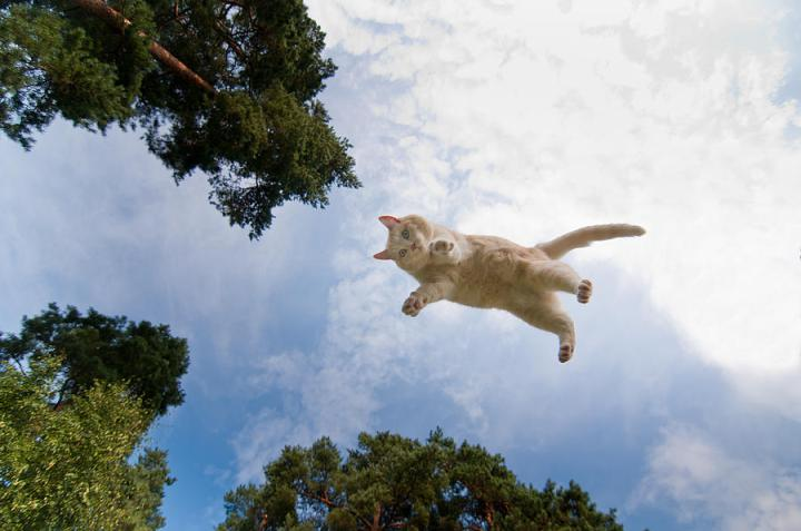 Flying-Cat-20