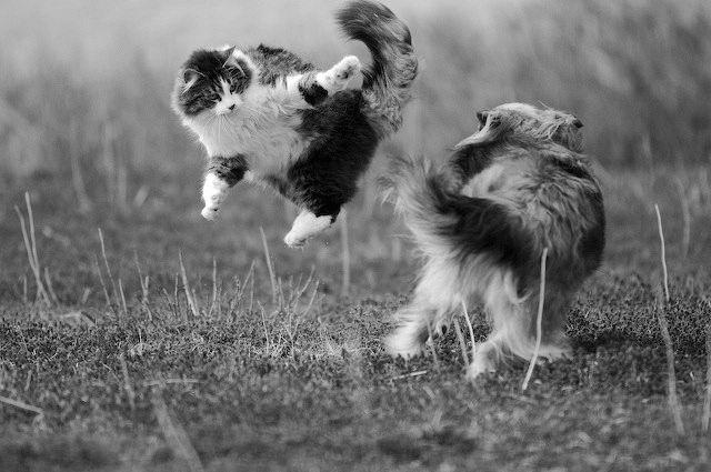 Flying-Cats-New-Wallpaper-05