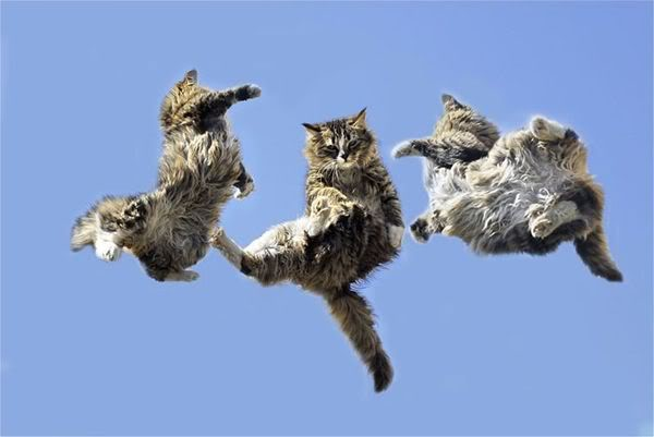 Jumping-cats15