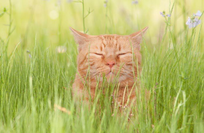 meditating-cat-Large
