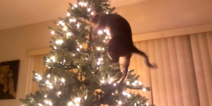o-CAT-TAKES-DOWN-TREE-facebook