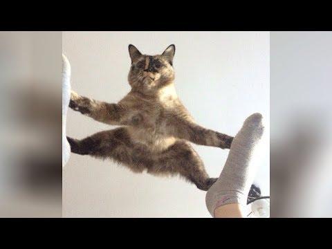 timeline-cat