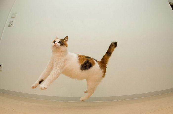 229706xcitefun-cat-3