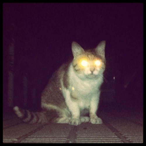 4-cats-night-vision