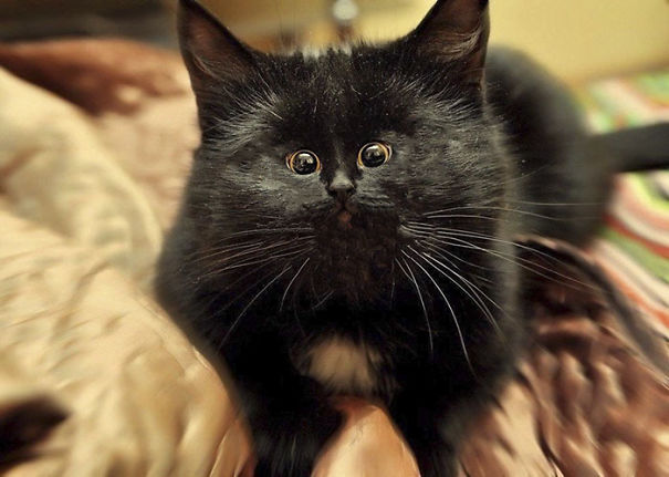 cat-with-small-face-596df8279f4bb__605