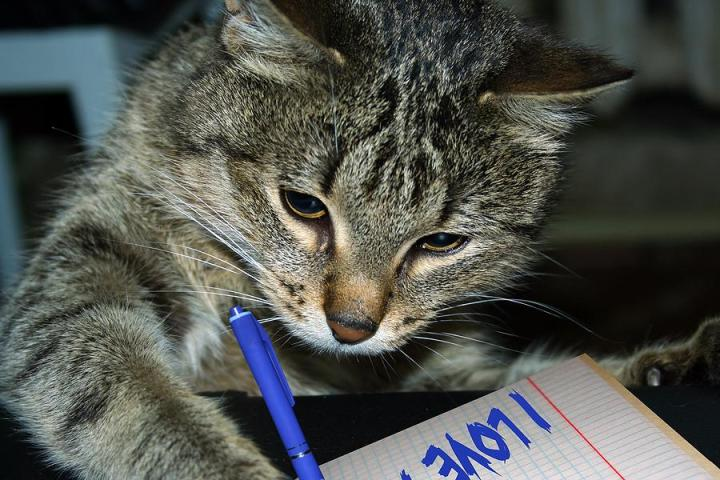 Cat-writing.jpg