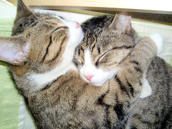 cats-hugging