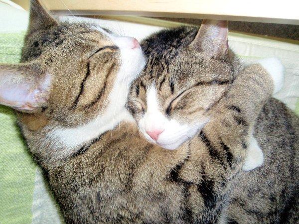 cats-hugging