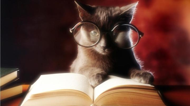 improve-my-writing-skills-cat-reading-book.jpg