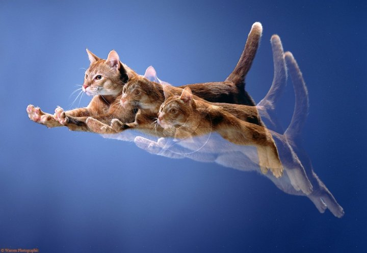 00392-ginger-cat-leaping-multiple-exposure