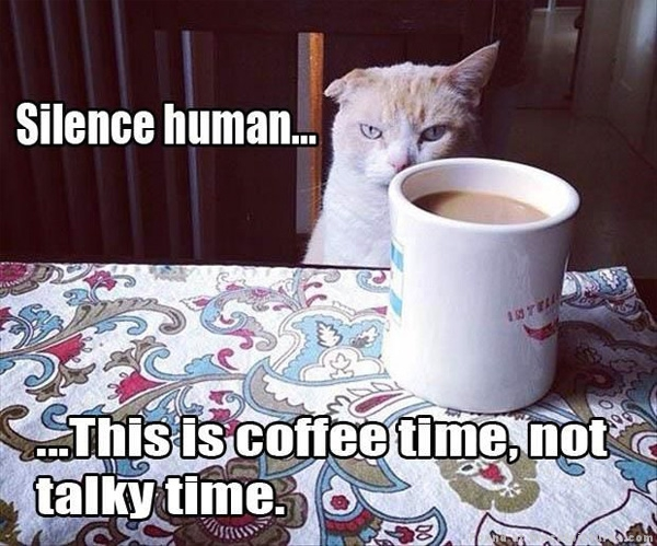 2110896012-funny-cat-pictures-coffee-time