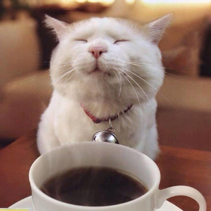 Cat-Cafe-Facebook
