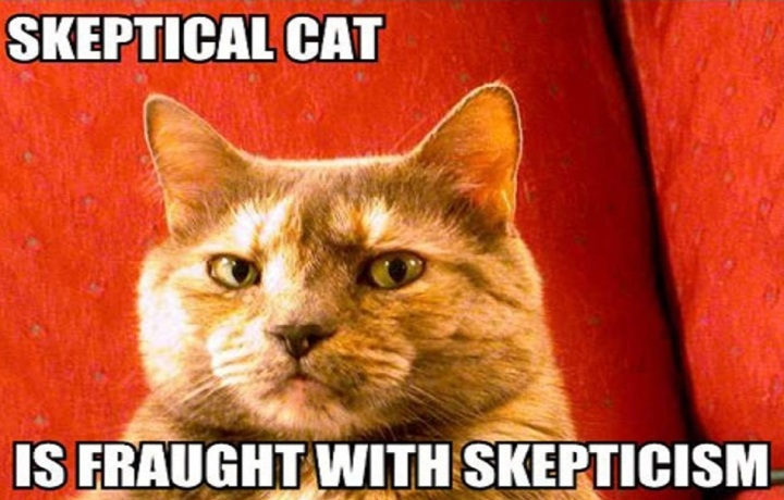 skeptical-cat-is-fraught-with-skepticism-2