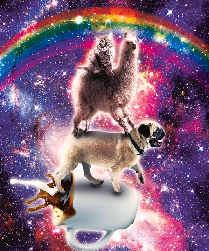 space-cat-llama-pug-riding-coffee-random-galaxy
