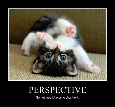 catperspective