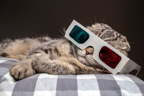 Cat-in-the-dark-with-3d-glasses-on