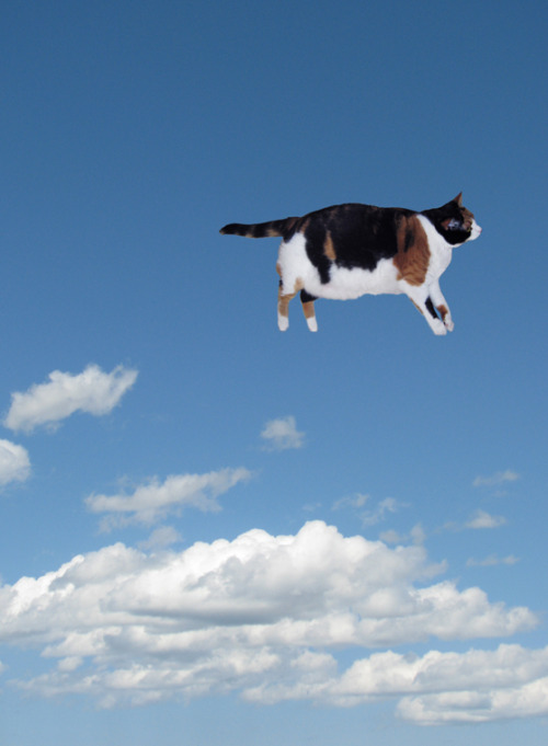 floaty-cat