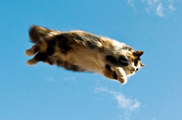 flying-cat-1