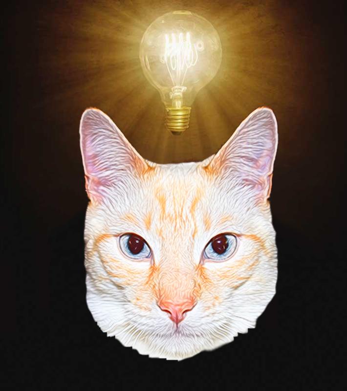cat-idea