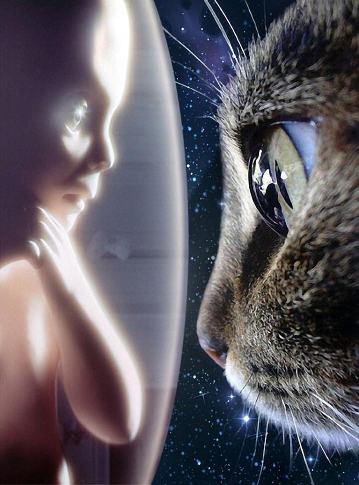 starchild-CAT