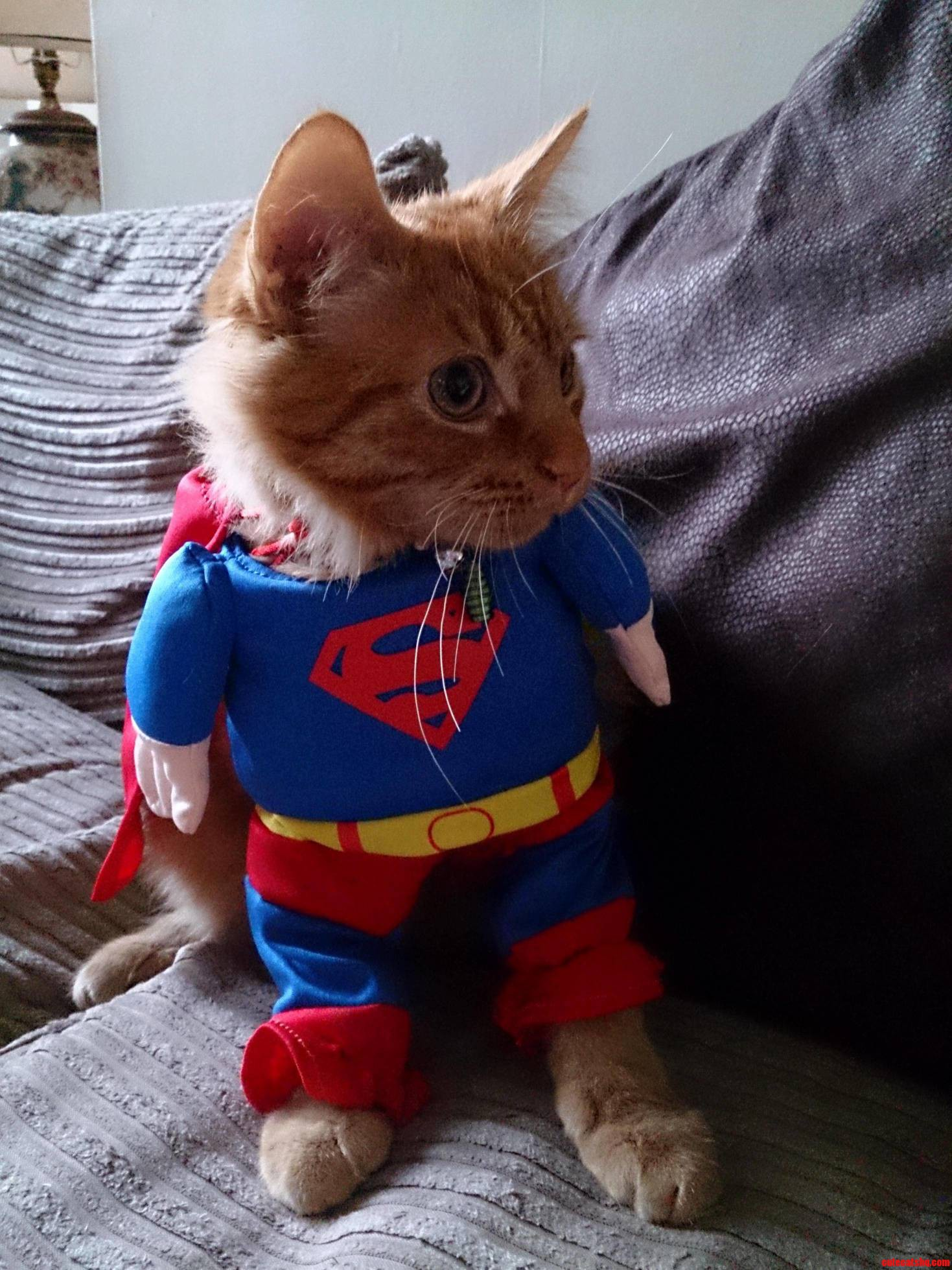Super-Cat-Follow-Wildeducation-On-Twitter-For-More-Pics