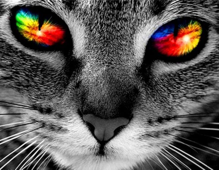 7f6aae63dcdc63a5923a480e129a8c8b--rainbow-eyes-rainbow-colors
