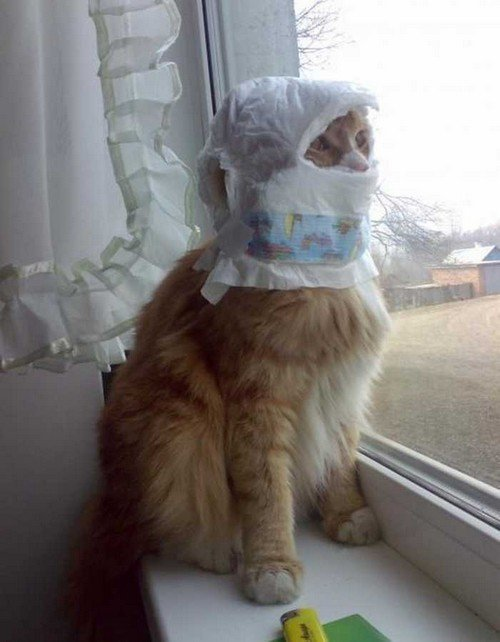 Cat-Stuck-Funny-Photos-15-diaper