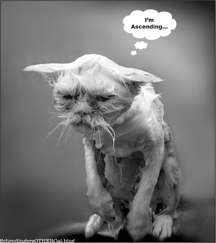 ascending-cat