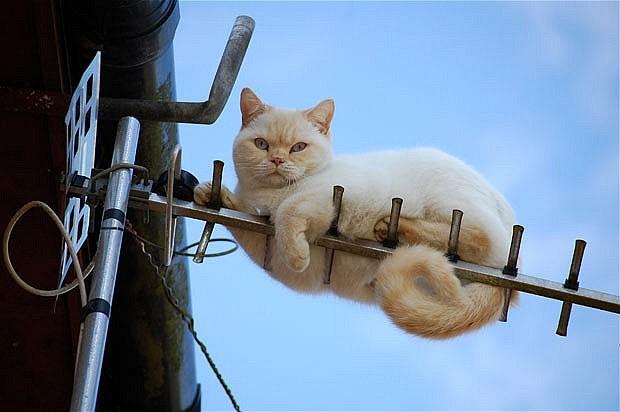 cat-yagi